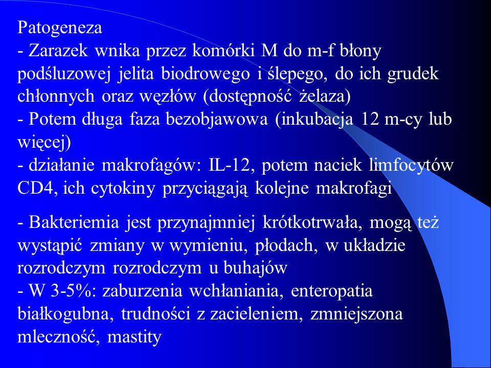 Patogeneza - Zarazek wnika przez komórki M do m-f błony podśluzowej jelita biodrowego i ślepego, do ich grudek chłonnych oraz węzłów (dostępność żelaz