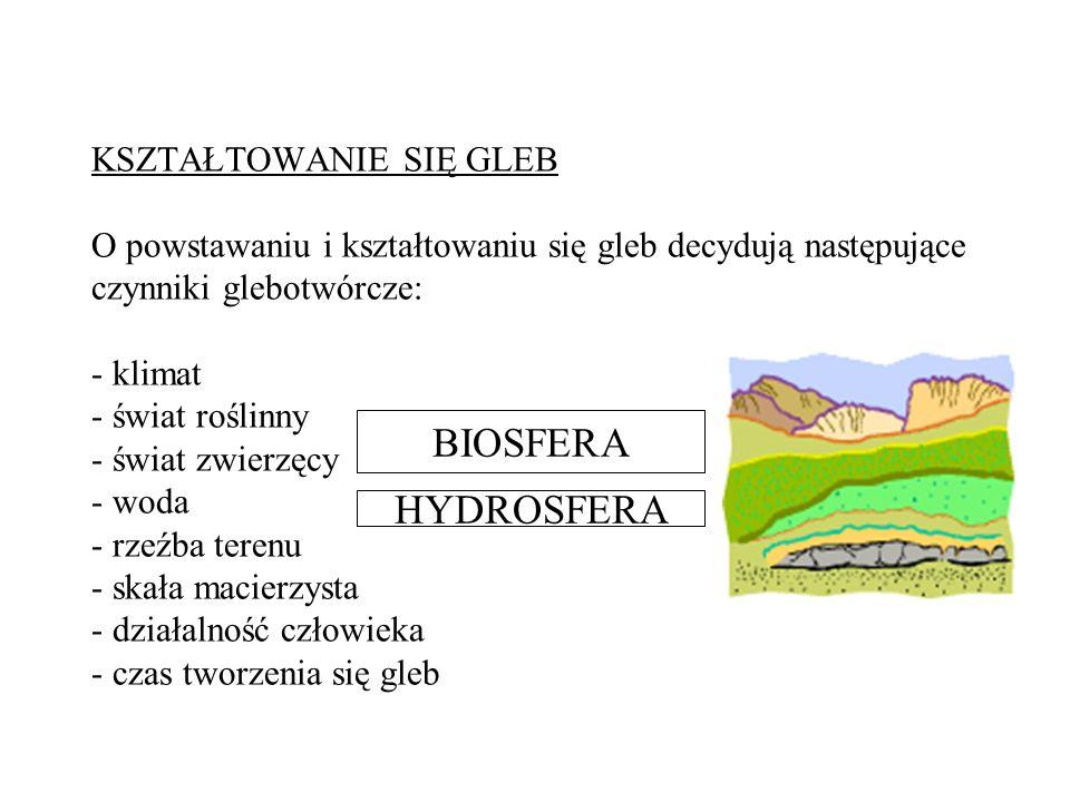 KSZTAŁTOWANIE SIĘ GLEB O powstawaniu i kształtowaniu się gleb decydują następujące czynniki glebotwórcze: - klimat - świat roślinny - świat zwierzęcy