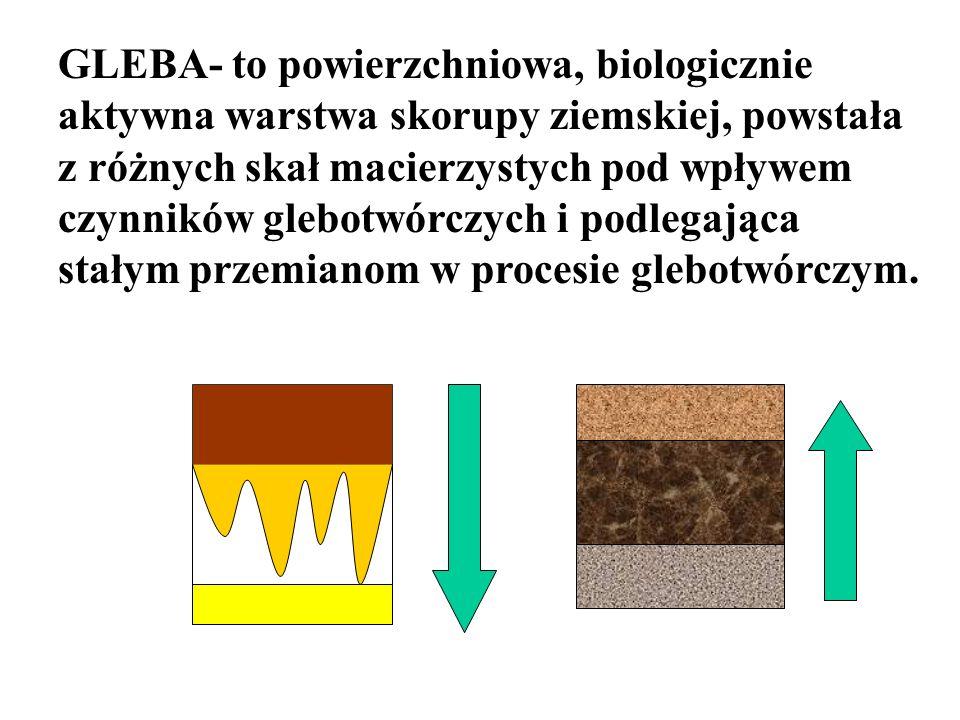 GLEBA- to powierzchniowa, biologicznie aktywna warstwa skorupy ziemskiej, powstała z różnych skał macierzystych pod wpływem czynników glebotwórczych i
