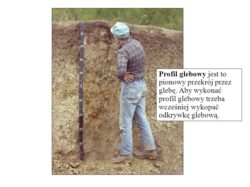 Profil glebowy jest to pionowy przekrój przez glebę. Aby wykonać profil glebowy trzeba wcześniej wykopać odkrywkę glebową.