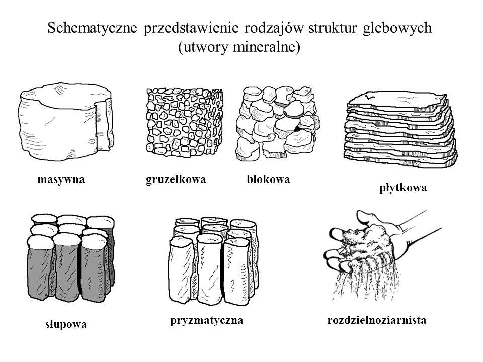 Schematyczne przedstawienie rodzajów struktur glebowych (utwory mineralne) masywnagruzełkowa płytkowa rozdzielnoziarnista słupowa pryzmatyczna blokowa