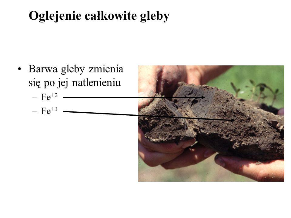 Barwa gleby zmienia się po jej natlenieniu –Fe +2 –Fe +3 Oglejenie całkowite gleby