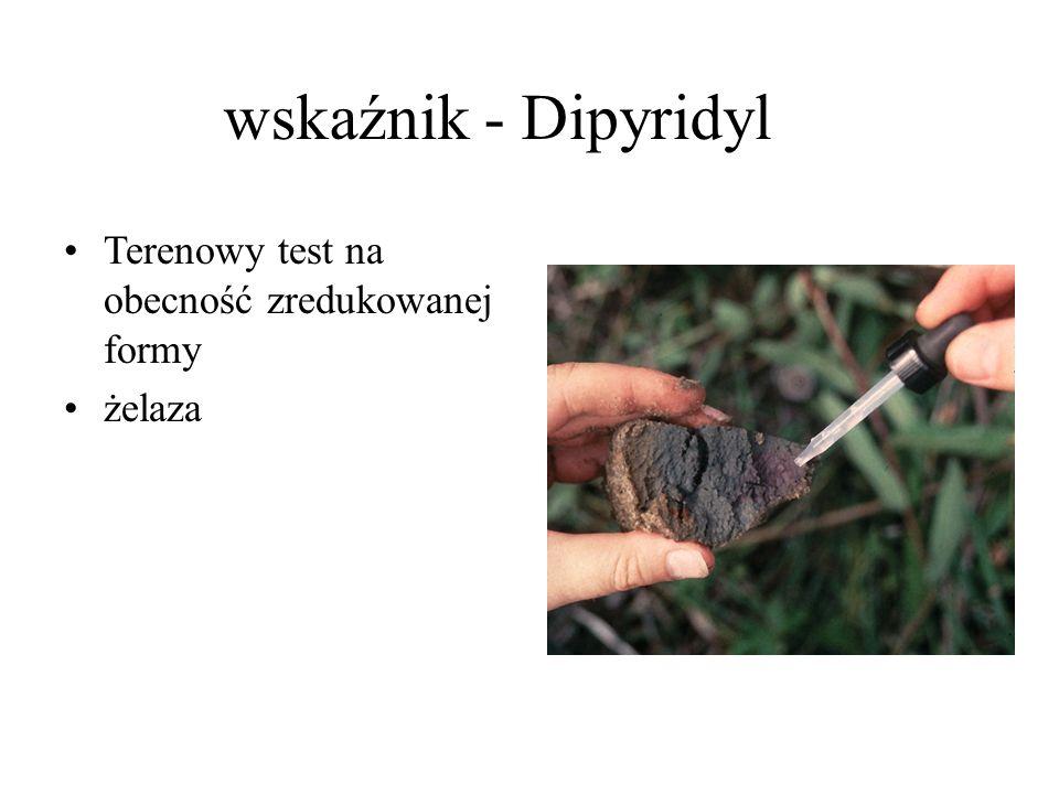 wskaźnik - Dipyridyl Terenowy test na obecność zredukowanej formy żelaza