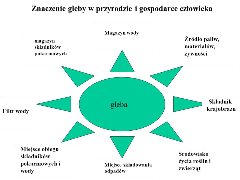 Znaczenie gleby w przyrodzie i gospodarce człowieka gleba magazyn składników pokarmowych Magazyn wody Miejsce składowania odpadów Filtr wody Źródło pa