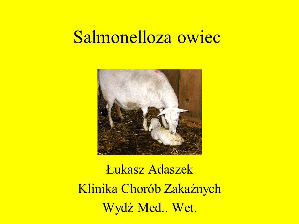 Salmonelloza owiec Łukasz Adaszek Klinika Chorób Zakaźnych Wydź Med.. Wet.