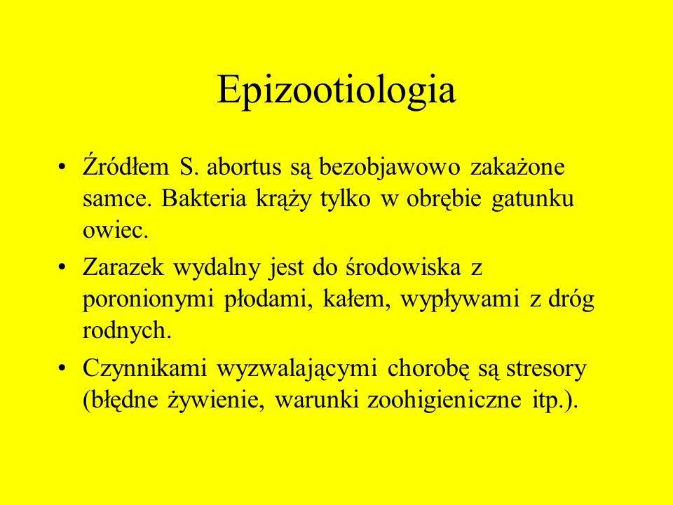 Epizootiologia Źródłem S. abortus są bezobjawowo zakażone samce. Bakteria krąży tylko w obrębie gatunku owiec. Zarazek wydalny jest do środowiska z po
