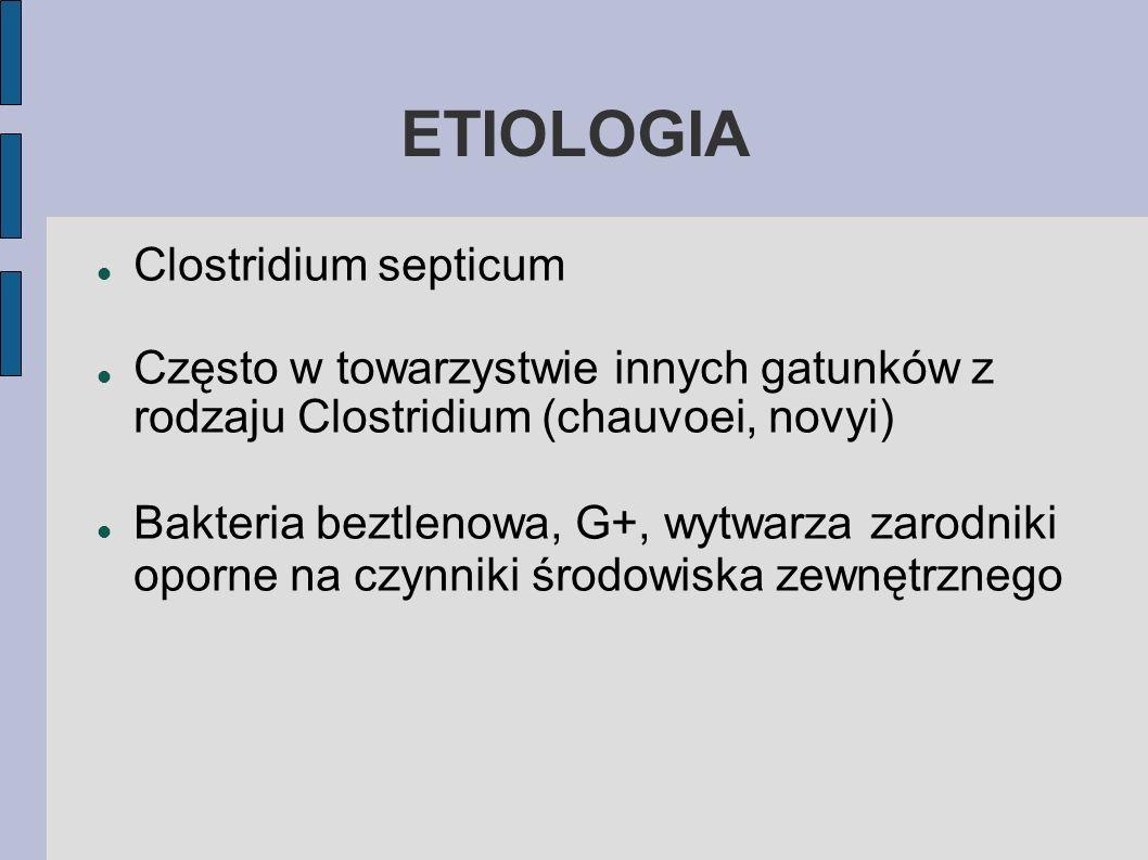 ETIOLOGIA Clostridium septicum Często w towarzystwie innych gatunków z rodzaju Clostridium (chauvoei, novyi) Bakteria beztlenowa, G+, wytwarza zarodni