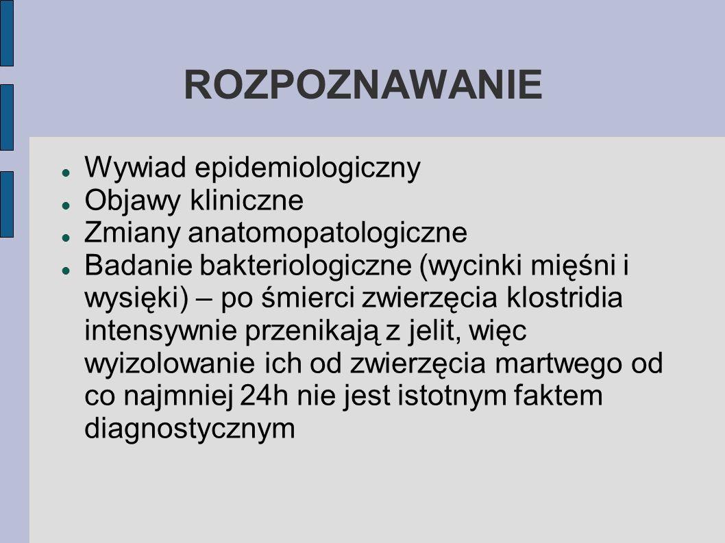 ROZPOZNAWANIE Wywiad epidemiologiczny Objawy kliniczne Zmiany anatomopatologiczne Badanie bakteriologiczne (wycinki mięśni i wysięki) – po śmierci zwi