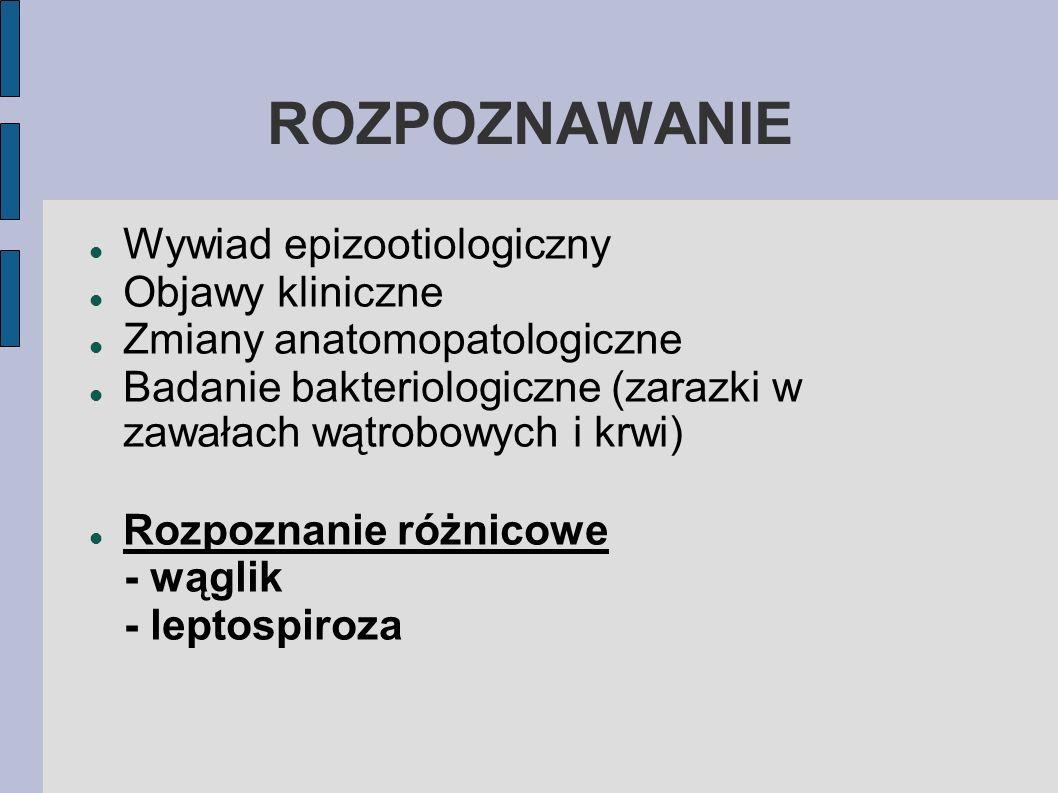 ROZPOZNAWANIE Wywiad epizootiologiczny Objawy kliniczne Zmiany anatomopatologiczne Badanie bakteriologiczne (zarazki w zawałach wątrobowych i krwi) Ro