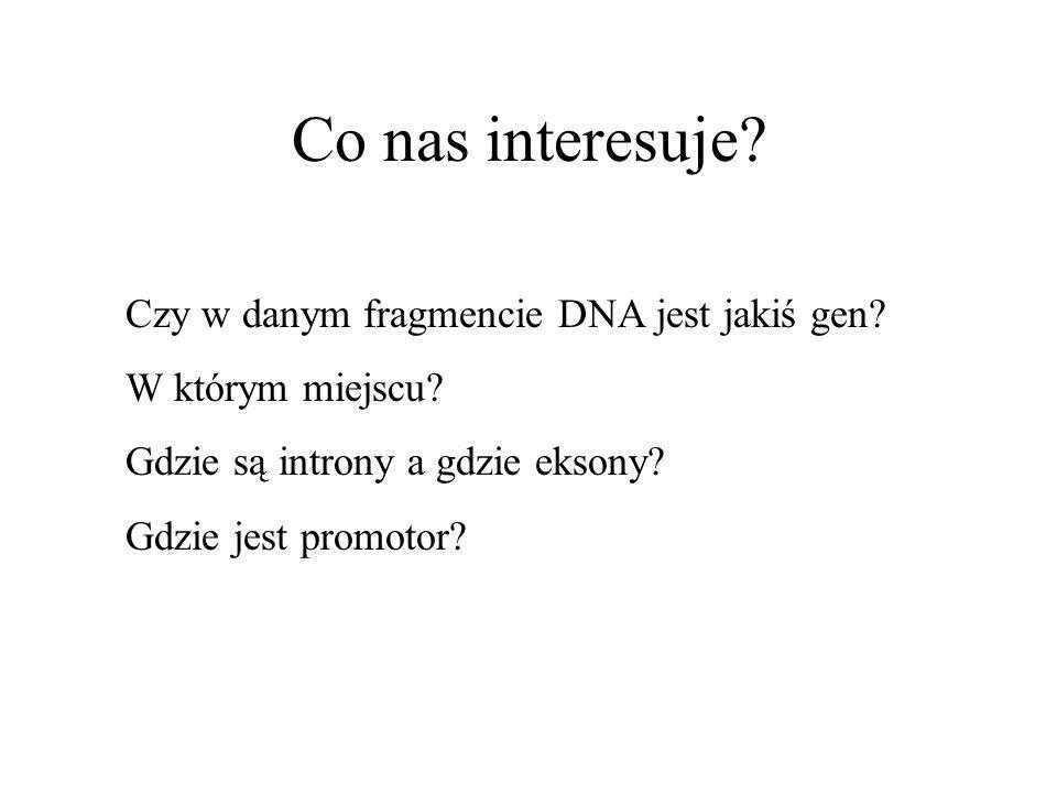 Co nas interesuje? Czy w danym fragmencie DNA jest jakiś gen? W którym miejscu? Gdzie są introny a gdzie eksony? Gdzie jest promotor?