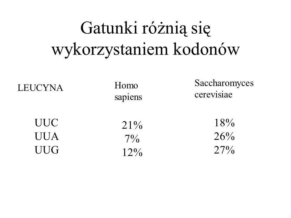 Gatunki różnią się wykorzystaniem kodonów Homo sapiens Saccharomyces cerevisiae UUC UUA UUG 21% 7% 12% 18% 26% 27% LEUCYNA