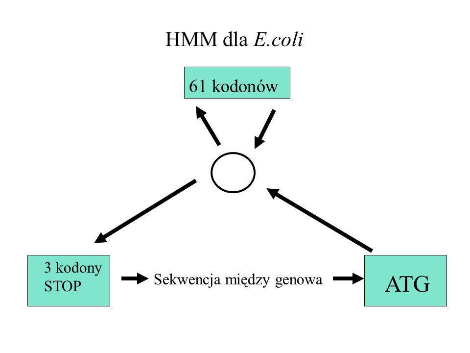 3 kodony STOP Sekwencja między genowa ATG 61 kodonów HMM dla E.coli