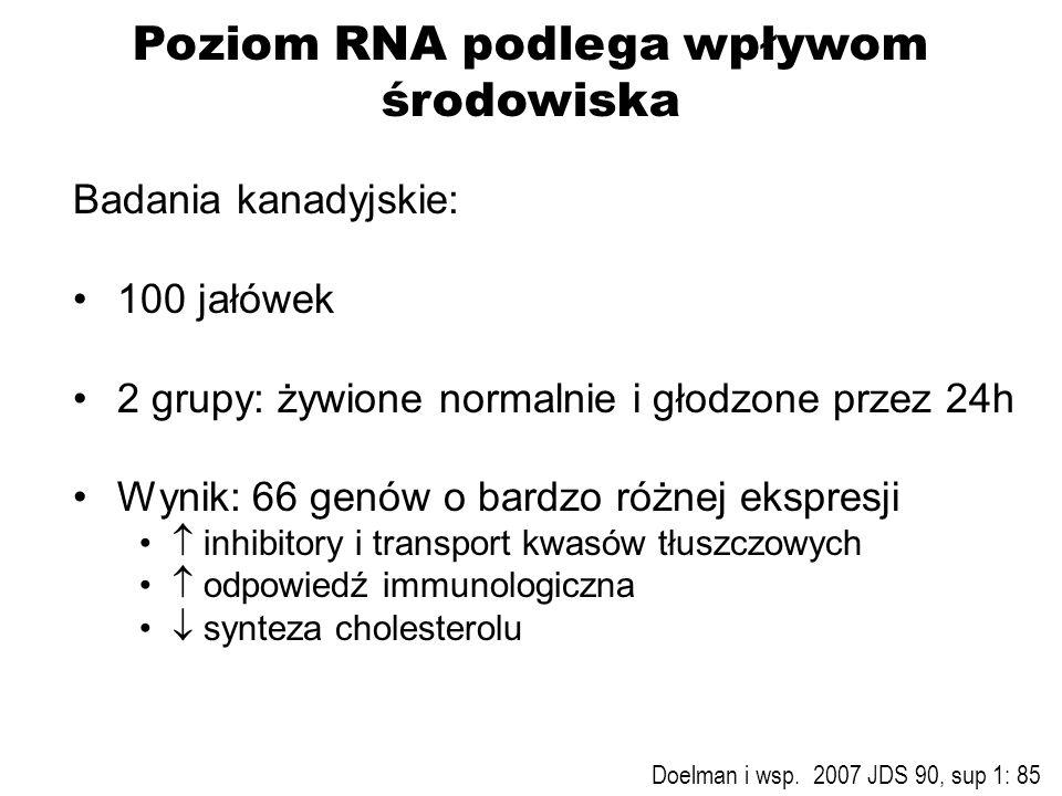 Poziom RNA podlega wpływom środowiska Badania kanadyjskie: 100 jałówek 2 grupy: żywione normalnie i głodzone przez 24h Wynik: 66 genów o bardzo różnej