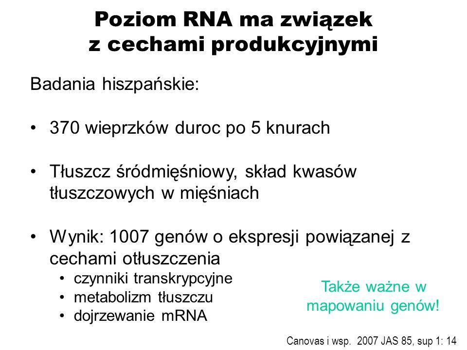 Poziom RNA ma związek z cechami produkcyjnymi Badania hiszpańskie: 370 wieprzków duroc po 5 knurach Tłuszcz śródmięśniowy, skład kwasów tłuszczowych w