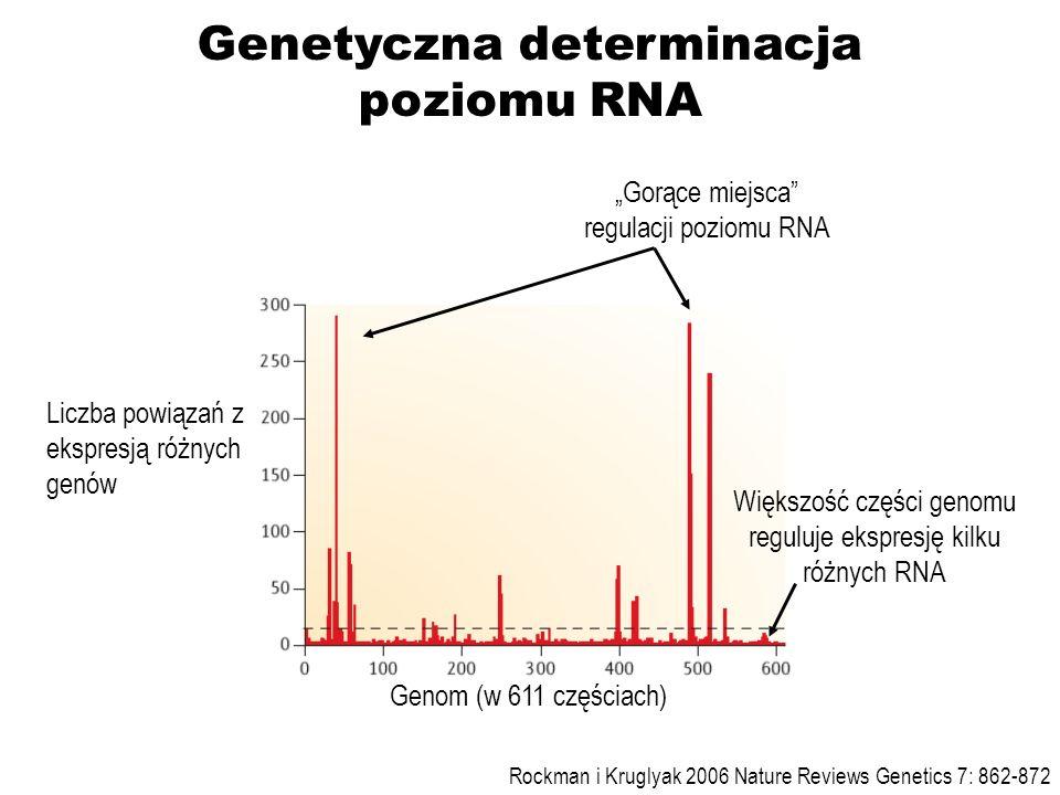 Genom (w 611 częściach) Liczba powiązań z ekspresją różnych genów Gorące miejsca regulacji poziomu RNA Większość części genomu reguluje ekspresję kilk