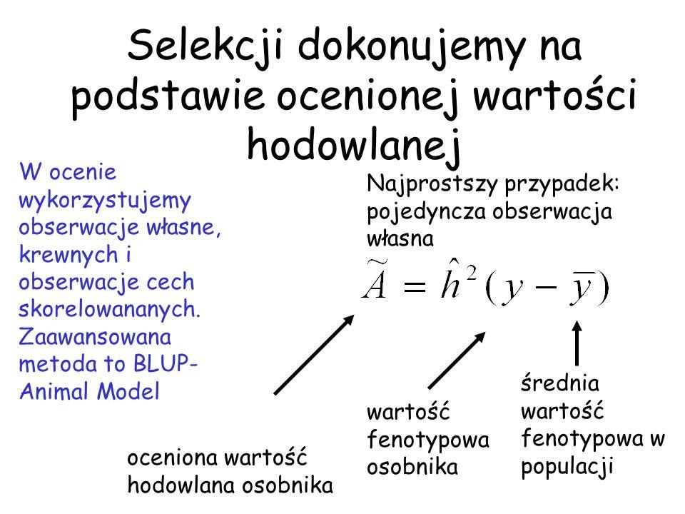 Selekcji dokonujemy na podstawie ocenionej wartości hodowlanej oceniona wartość hodowlana osobnika wartość fenotypowa osobnika średnia wartość fenotyp