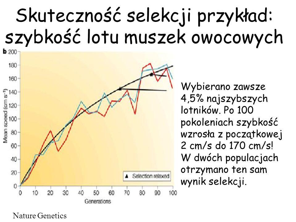 Skuteczność selekcji przykład: szybkość lotu muszek owocowych Wybierano zawsze 4,5% najszybszych lotników. Po 100 pokoleniach szybkość wzrosła z począ