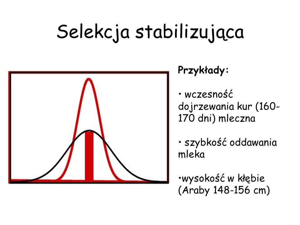 Selekcja stabilizująca Przykłady: wczesność dojrzewania kur (160- 170 dni) mleczna szybkość oddawania mleka wysokość w kłębie (Araby 148-156 cm)