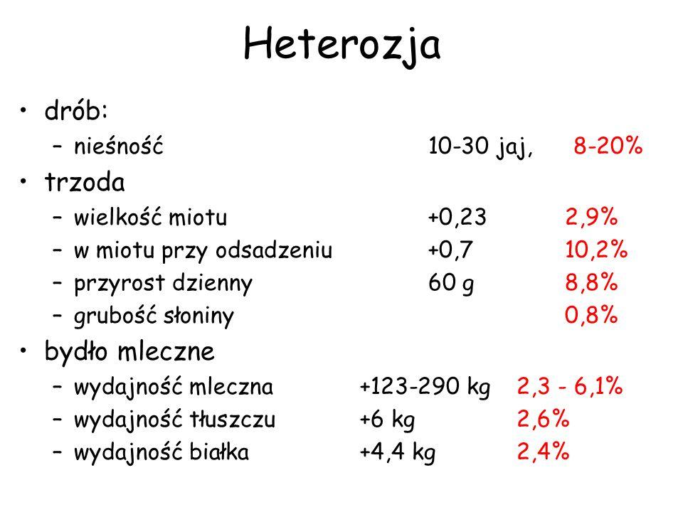 Heterozja drób: –nieśność10-30 jaj, 8-20% trzoda –wielkość miotu +0,232,9% –w miotu przy odsadzeniu+0,710,2% –przyrost dzienny60 g8,8% –grubość słonin