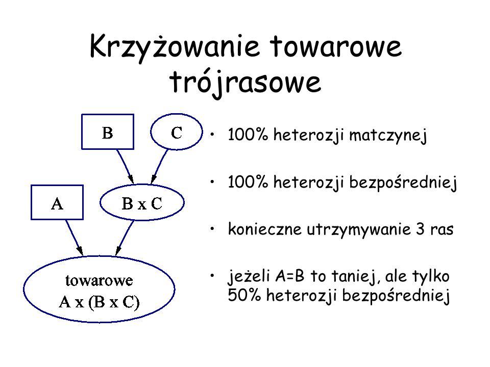 Krzyżowanie towarowe trójrasowe 100% heterozji matczynej 100% heterozji bezpośredniej konieczne utrzymywanie 3 ras jeżeli A=B to taniej, ale tylko 50%