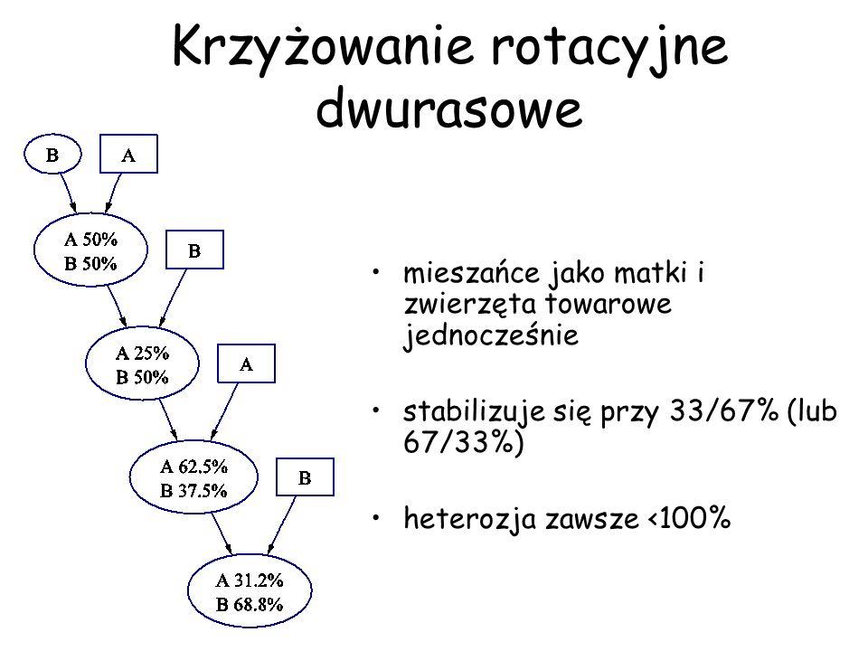 Krzyżowanie rotacyjne dwurasowe mieszańce jako matki i zwierzęta towarowe jednocześnie stabilizuje się przy 33/67% (lub 67/33%) heterozja zawsze <100%