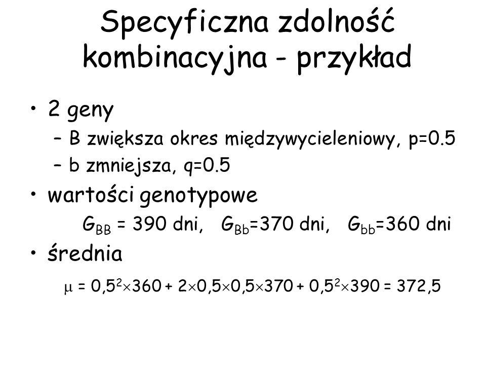 Specyficzna zdolność kombinacyjna - przykład 2 geny –B zwiększa okres międzywycieleniowy, p=0.5 –b zmniejsza, q=0.5 wartości genotypowe G BB = 390 dni