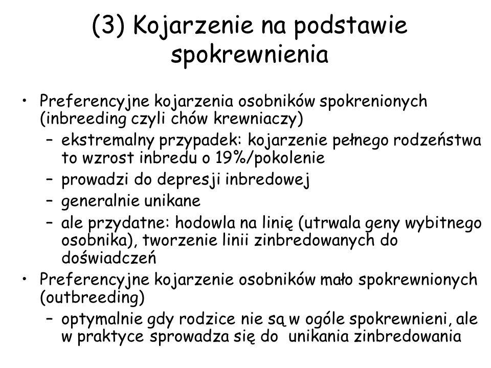 (3) Kojarzenie na podstawie spokrewnienia Preferencyjne kojarzenia osobników spokrenionych (inbreeding czyli chów krewniaczy) –ekstremalny przypadek: