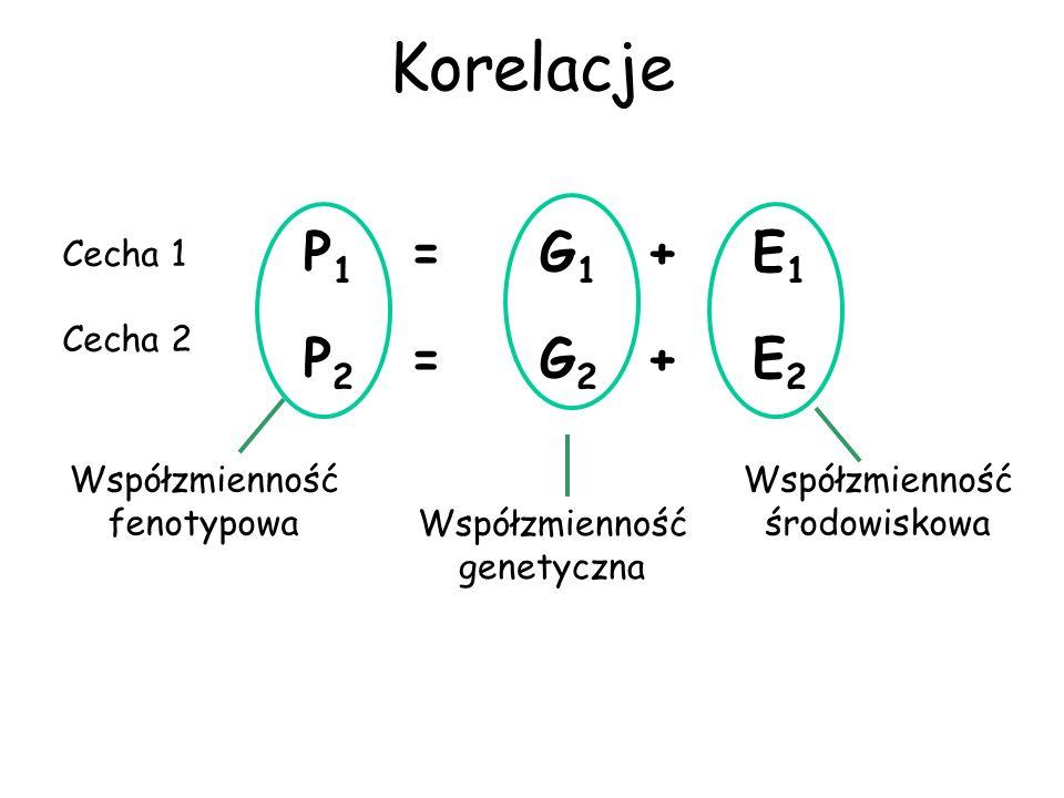 Korelacje P 1 = G 1 + E 1 P 2 = G 2 + E 2 Współzmienność fenotypowa Współzmienność genetyczna Współzmienność środowiskowa Cecha 1 Cecha 2
