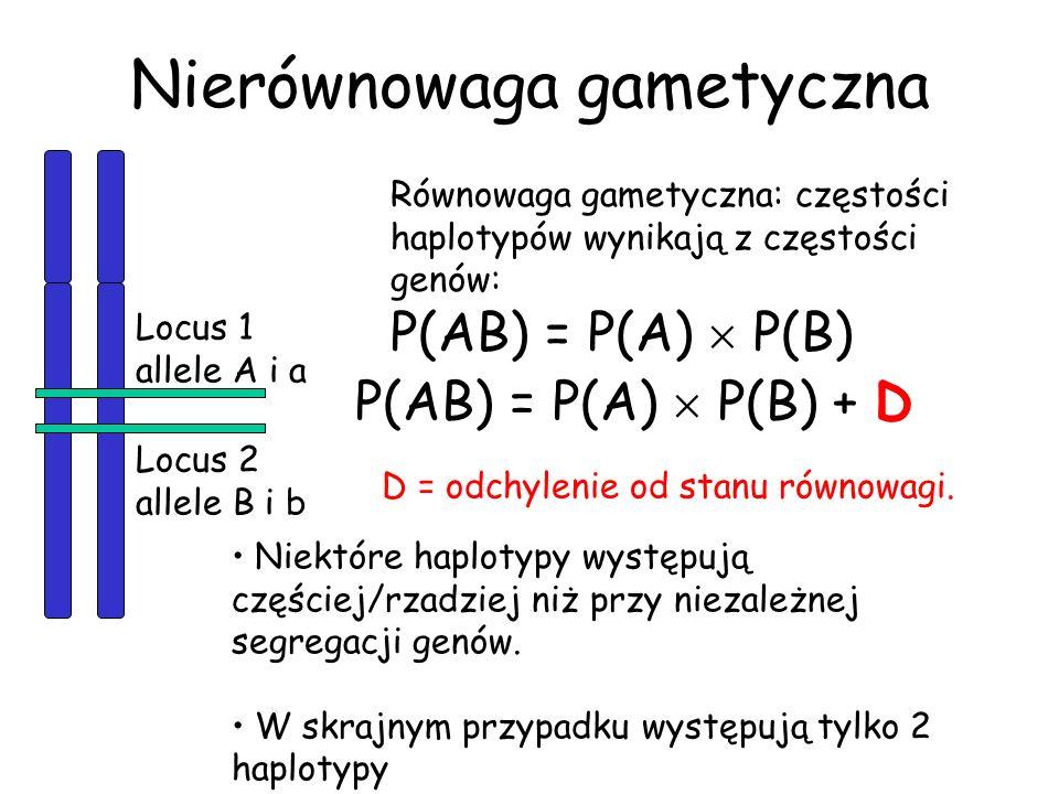 Nierównowaga gametyczna Locus 1 allele A i a Locus 2 allele B i b Równowaga gametyczna: częstości haplotypów wynikają z częstości genów: P(AB) = P(A)