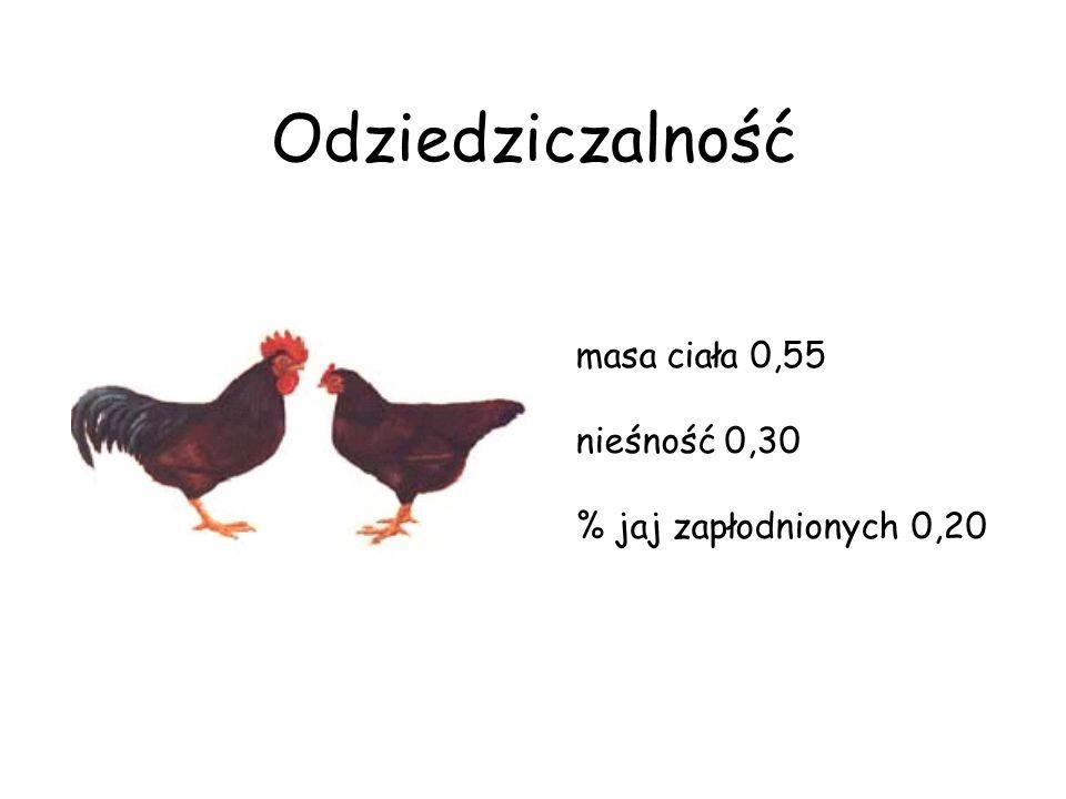 Odziedziczalność masa ciała 0,55 nieśność 0,30 % jaj zapłodnionych 0,20