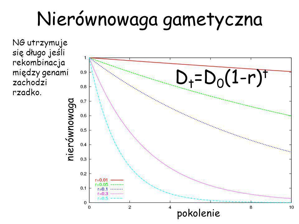 Nierównowaga gametyczna Równowaga Grupy markerowe mają taką samą średnią fenotypową.
