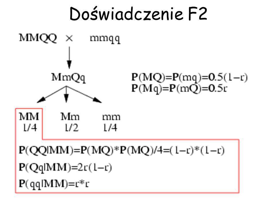L 1 = P( QQ | MM ) × f( y 1 | µ QQ, ) + P( Qq | MM ) × f( y 1 | µ Qq, ) + P( qq | MM ) × f( y 1 | µ qq, ) Świnia F2 o genotypie MM i fenotypie y 1 Wszystkie swinie F2 L = L 1 × L 2 × L 3 ×...