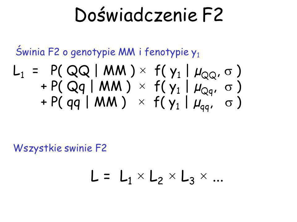 Doświadczenie F2 LR = -2ln[ maxLr / maxL] LOD LR/4,61 cM LOD MaxLr = maksymalna funkcja L przy braku QTL (np przy µ QQ = µ Qq = µ qq ) MaxL = maksymalna funkcja L przy QTL w danej pozycji Obliczenia powtarzamy dla każdej hipotetycznej pozycji QTL, np.