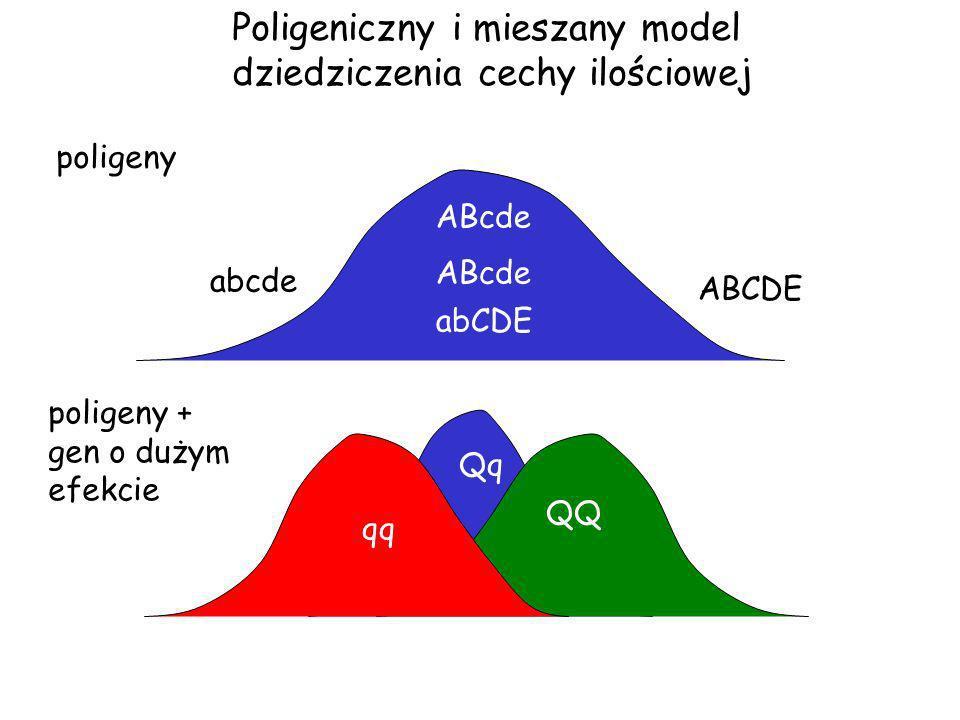 Mapy markerowe To zestawy markerów zebranych w grupy sprzężeniowe i przypisane do konkretnych chromosomów 120 cM 0 cM 50 cM Pozycja markerów musi być znana.