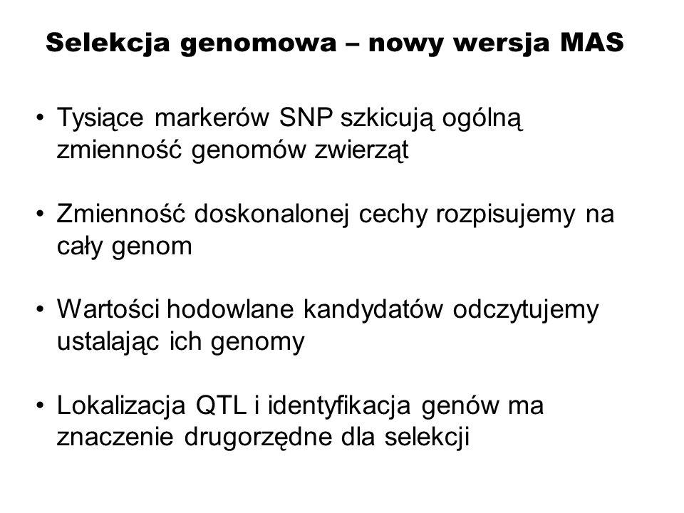 Tysiące markerów SNP szkicują ogólną zmienność genomów zwierząt Zmienność doskonalonej cechy rozpisujemy na cały genom Wartości hodowlane kandydatów o