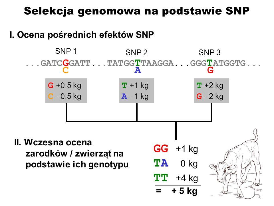 ....GATC G GATT...TATGG T TAAGGA...GGG T ATGGTG... C AG SNP 1 SNP 2SNP 3 G +0,5 kg C - 0,5 kg T +1 kg A - 1 kg T +2 kg G - 2 kg GG +1 kg TA 0 kg TT +4