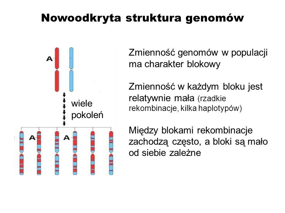 Nowoodkryta struktura genomów wiele pokoleń Zmienność genomów w populacji ma charakter blokowy Zmienność w każdym bloku jest relatywnie mała (rzadkie