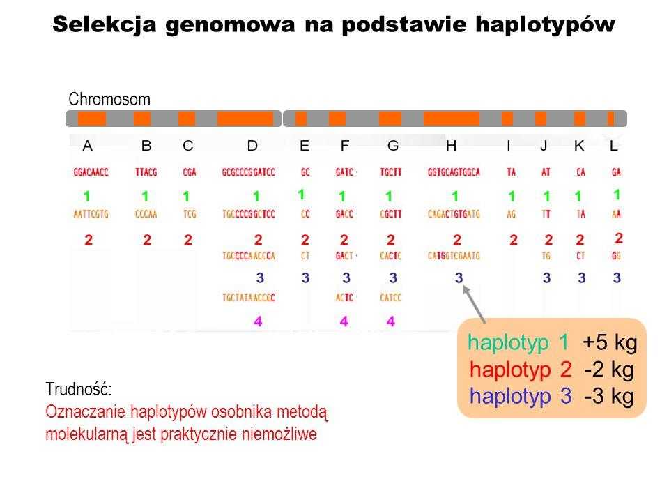 haplotyp 1 +5 kg haplotyp 2 -2 kg haplotyp 3 -3 kg Selekcja genomowa na podstawie haplotypów Trudność: Oznaczanie haplotypów osobnika metodą molekular