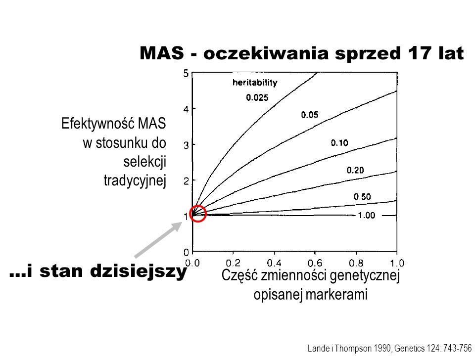 Efektywność MAS w stosunku do selekcji tradycyjnej Lande i Thompson 1990, Genetics 124: 743-756 MAS - oczekiwania sprzed 17 lat...i stan dzisiejszy Cz