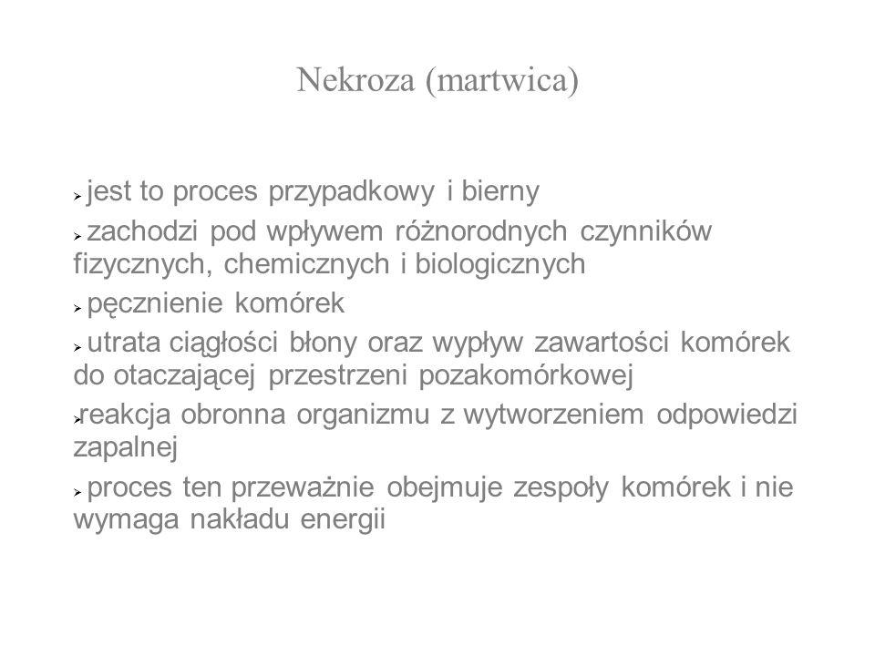 Nekroza (martwica) Nekroza (martwica): jest to proces przypadkowy i bierny jest to proces przypadkowy i bierny zachodzi pod wpływem różnorodnych czynn