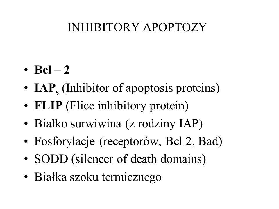 INHIBITORY APOPTOZY Bcl – 2 IAP s (Inhibitor of apoptosis proteins) FLIP (Flice inhibitory protein) Białko surwiwina (z rodziny IAP) Fosforylacje (rec