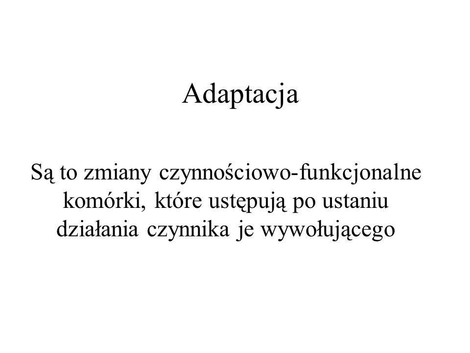 Ciałka apoptotyczne
