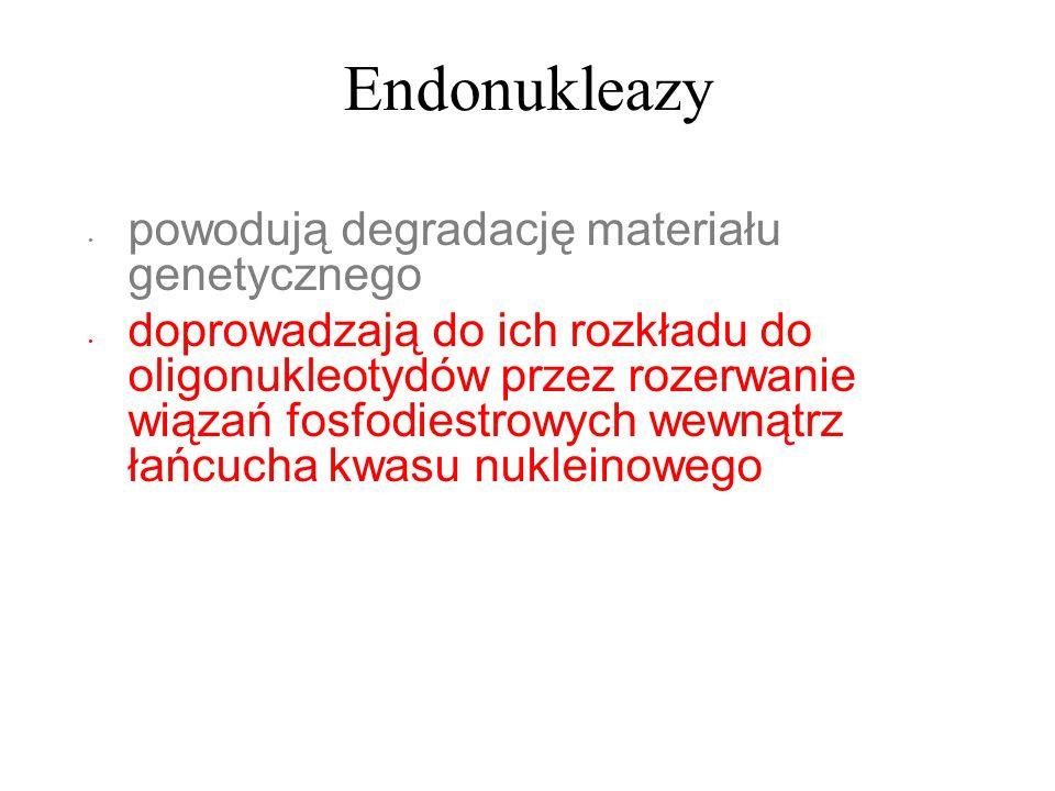Endonukleazy powodują degradację materiału genetycznego doprowadzają do ich rozkładu do oligonukleotydów przez rozerwanie wiązań fosfodiestrowych wewn