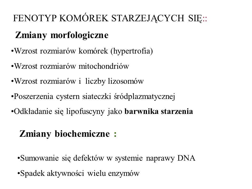 CZYNNIKI INDUKUJĄCE APOPTOZĘ Biologiczne: hormony: (glikokortykoidy, h.