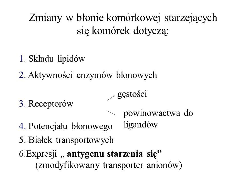 INHIBITORY APOPTOZY Bcl – 2 IAP s (Inhibitor of apoptosis proteins) FLIP (Flice inhibitory protein) Białko surwiwina (z rodziny IAP) Fosforylacje (receptorów, Bcl 2, Bad) SODD (silencer of death domains) Białka szoku termicznego