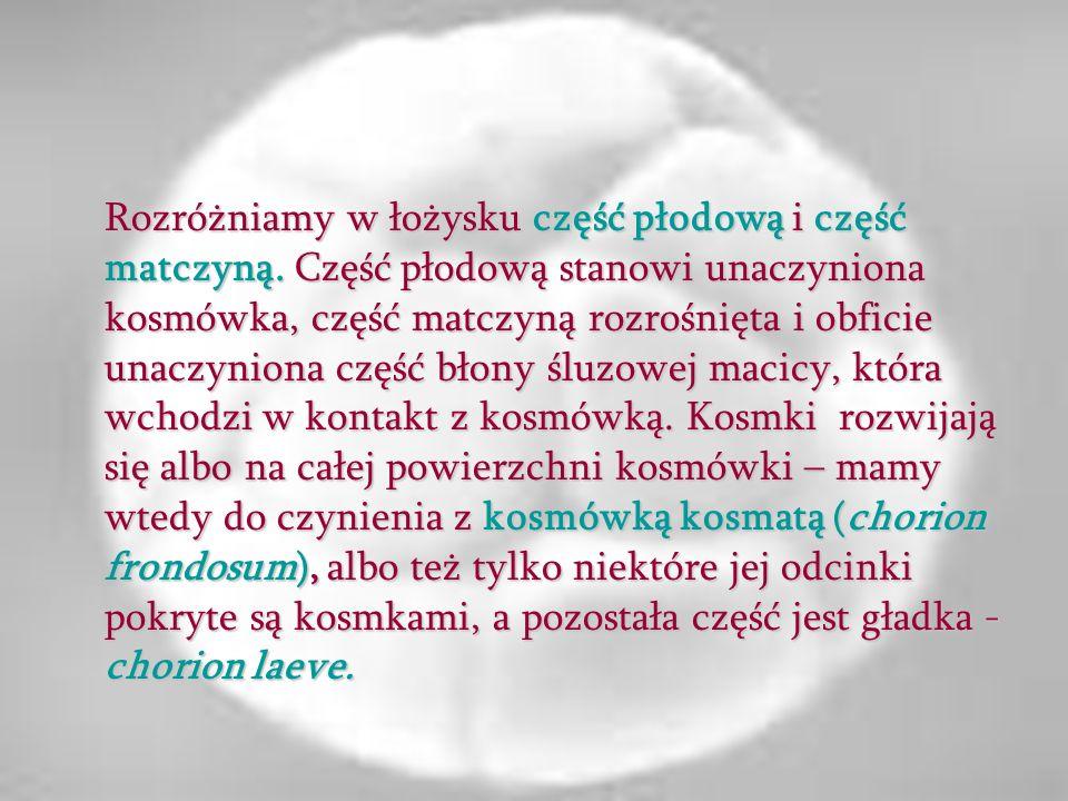 Rozróżniamy w łożysku część płodową i część matczyną. Część płodową stanowi unaczyniona kosmówka, część matczyną rozrośnięta i obficie unaczyniona czę