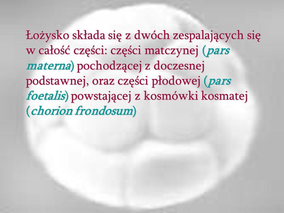 Łożysko składa się z dwóch zespalających się w całość części: części matczynej (pars materna) pochodzącej z doczesnej podstawnej, oraz części płodowej