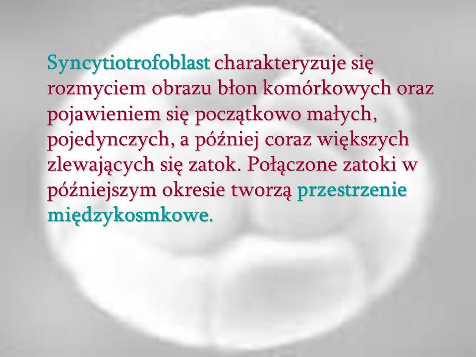 Syncytiotrofoblast charakteryzuje się rozmyciem obrazu błon komórkowych oraz pojawieniem się początkowo małych, pojedynczych, a później coraz większyc