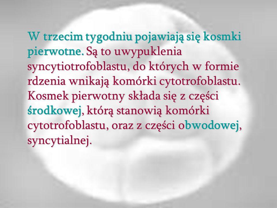 W trzecim tygodniu pojawiają się kosmki pierwotne. Są to uwypuklenia syncytiotrofoblastu, do których w formie rdzenia wnikają komórki cytotrofoblastu.