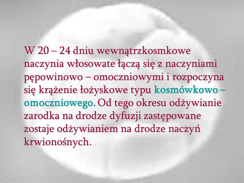 W 20 – 24 dniu wewnątrzkosmkowe naczynia włosowate łączą się z naczyniami pępowinowo – omoczniowymi i rozpoczyna się krążenie łożyskowe typu kosmówkow